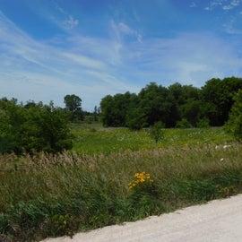 Meadow on bike Trail