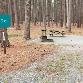 Pocomoke River Milburn Landing Site 36