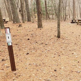 Pocomoke River Milburn Landing Site 1