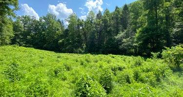 Goforth Creek Campground B