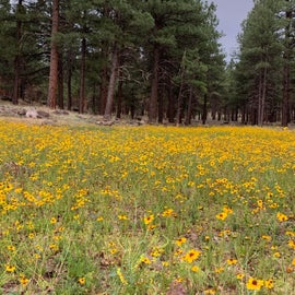 Flowers surrounding the lake