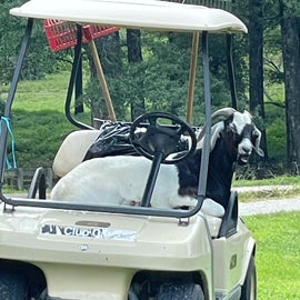 just hanging out on the golf cart