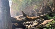 Hawaii County Park Kolekole Gulch Park