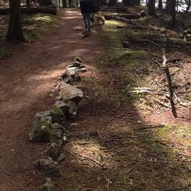 Mountain Lake trail