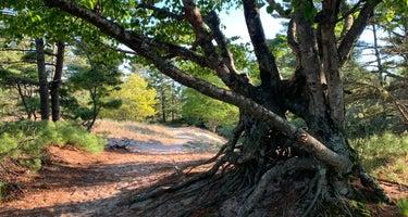 Beechwood - Ludington State Park