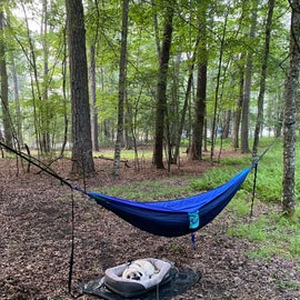 plenty of trees to choose from when setting up a hammock