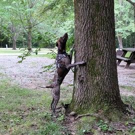 Squirrels!!