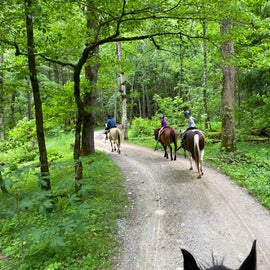 On the trail ride for the Cades Cove stables