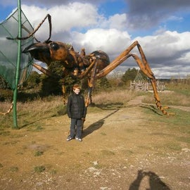 One of the bigger ants