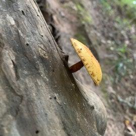 mushroom on the trail