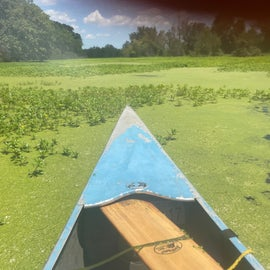 algae and duckweed on the water, at least it didn't smell