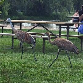 Cranes at the beach