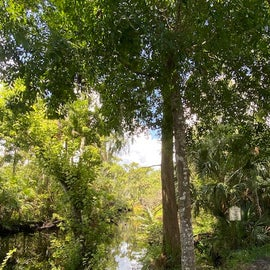 Pellicer Creek Park is surrounded by lush vegetation