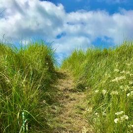 A sand dune path.