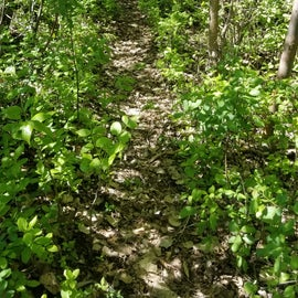 Part of one of the trails that wrap around the edge of the campground at Eggert's