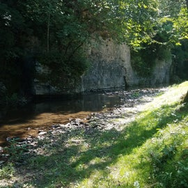 View of the stream