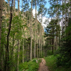 Trail in the Carson National Forest