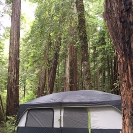 Spacious site #146 - perfect for our 12 person + 6 person tent.  Great privacy here, complete with picnic table and fire ring (plus 2 friendly chipmunks and a clutch of blue birds) under the canopy of second generation Redwoods!