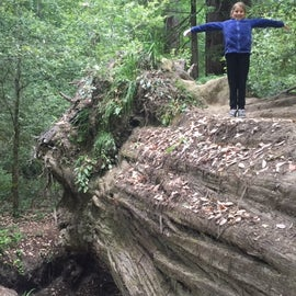 My wee littlest one standing atop a fellen wooden soldier that helped us cross the creek (for those less adventuresome, there's a bridge).