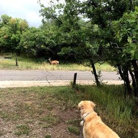 Deer at camp