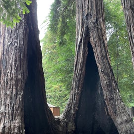 the twins redwoods