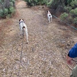 Walking along Matt's trail