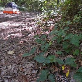 There is poison ivy around the campsite, so be careful.