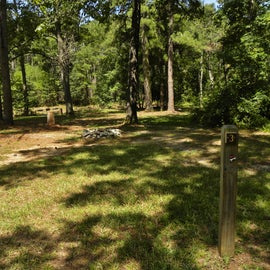 Other Campsites along the Tree Line