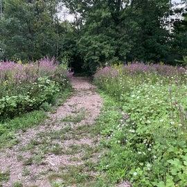 Running/walking trail