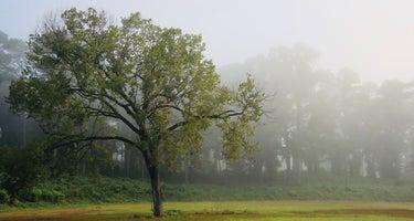 Natchez Trace State Park