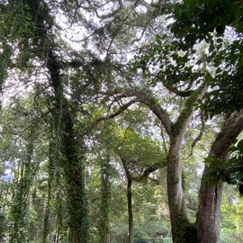 Big old trees dangling their Spanish Moss were everywhere in this lush garden of paradise