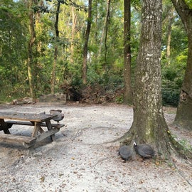 Another campsite near the lodge where the turkey vultures were making camp