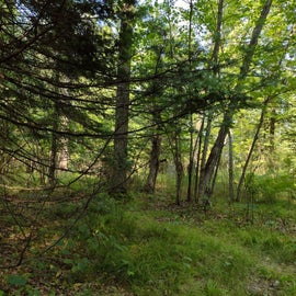 A view of the woods on one side of our site.