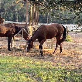 they have 10 horses for horseback riding you can book