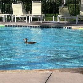 Surprise pool guest