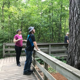 DO stop along Wilderness Drive to see some very big trees! They are not the MN chart toppers any longer, but the short walk to visit them was worth it on our driving tour.