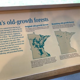 Quite a change in the amount of old growth forests in MN over the years.  Thankful that those left are preserved for (hopefully) generations left to come.  The interpretive museum at the Jacob V. Brower center is REALLY GOOD!  Carve out 45m to visit there to learn about the history of the area.