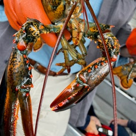 Lobster just out of Acadia waters- ANP