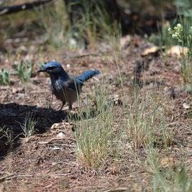 local bird 🐦