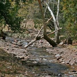 Cave Creek behind their birding property in Portal