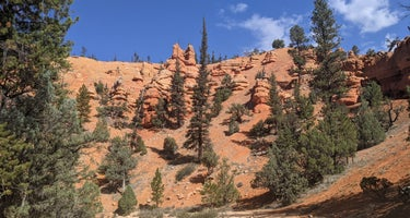 Bryce Canyon Area Dispersed Camping