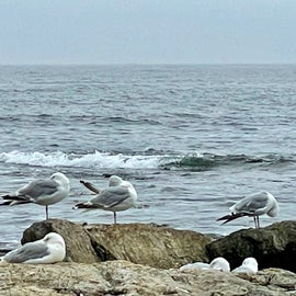 Seven gulls on the seawall