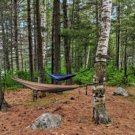 Two happy hammocks.