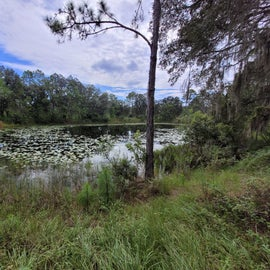 small pond to walk around and explore