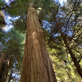 Redwoods nearby