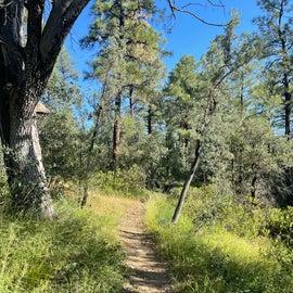 Lynx Lake Trail