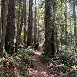 Rogue Gulch hike