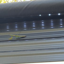 Got a visit from a cool Praying Mantis!