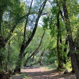 Nice shade trees