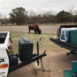 site 26 bison